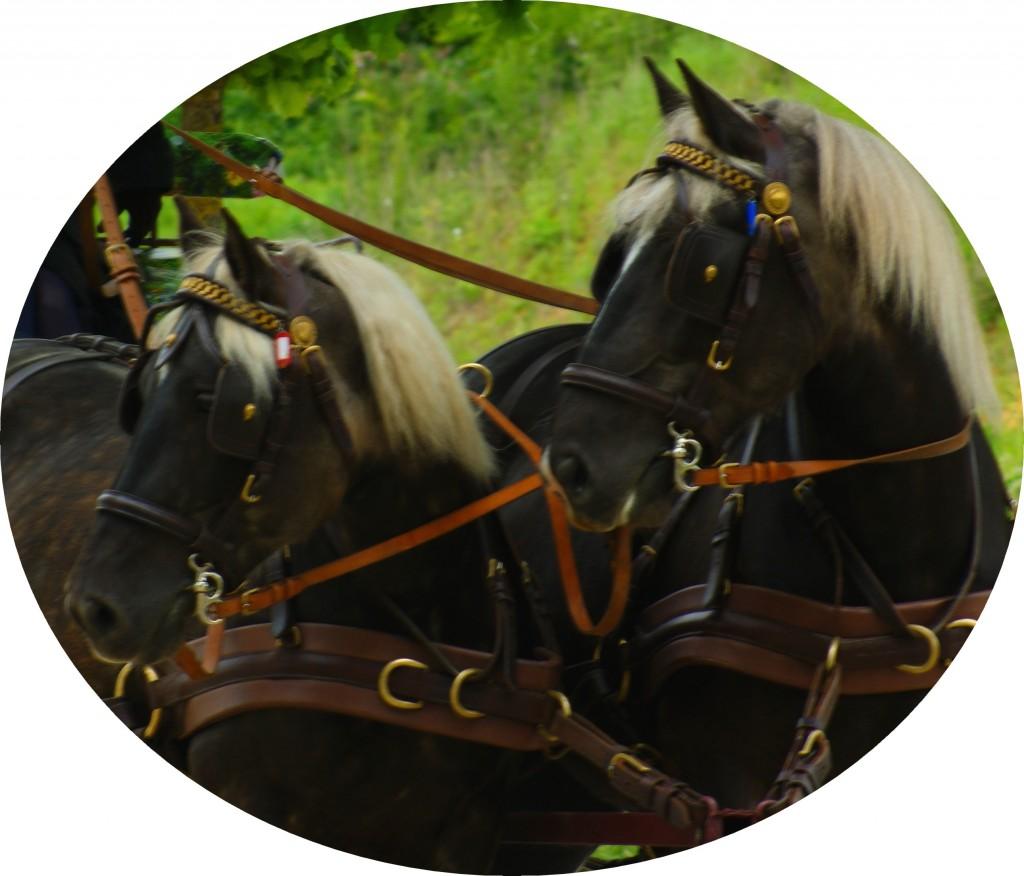 au pas lent des chevaux location de v hicule val de marne 94 villejuif les. Black Bedroom Furniture Sets. Home Design Ideas