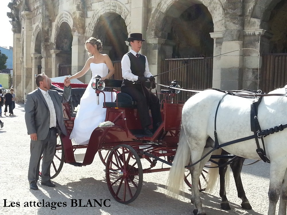les attelages blanc - Location Caleche Mariage