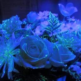 Aglaé le végétal luminescent !