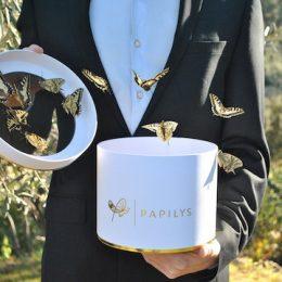 PAPILYS – Envolées de Papillons
