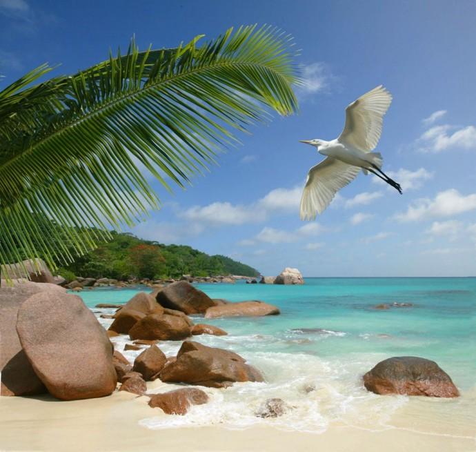 oiseau et plage seychelles