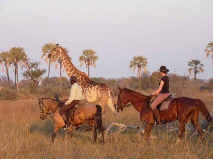 Botswana - Safari équestre dans l'Okavango