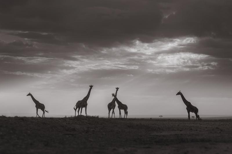 Mariage Kenya Masai 17