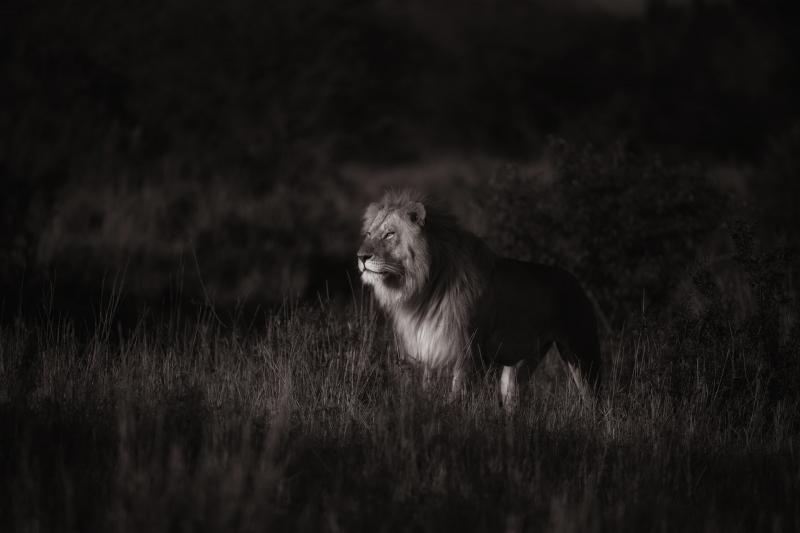 Mariage Kenya Masai 18