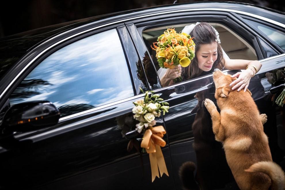 portrait amour chien mariee ceremonie mariage