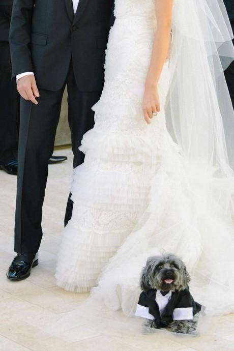 sylvie-gil-photographie-chien-demariage