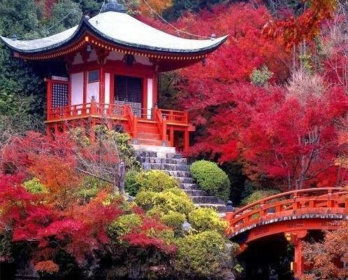 voyage de noces japon  (10)