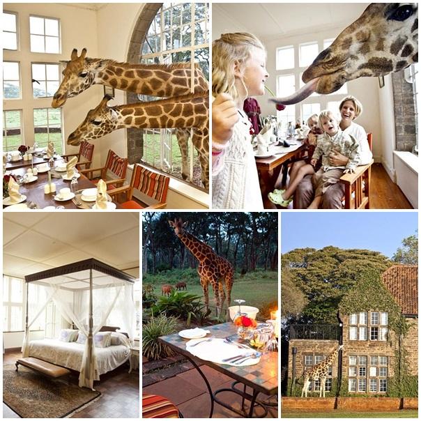 Lune de miel Manoir des girafes Kenya