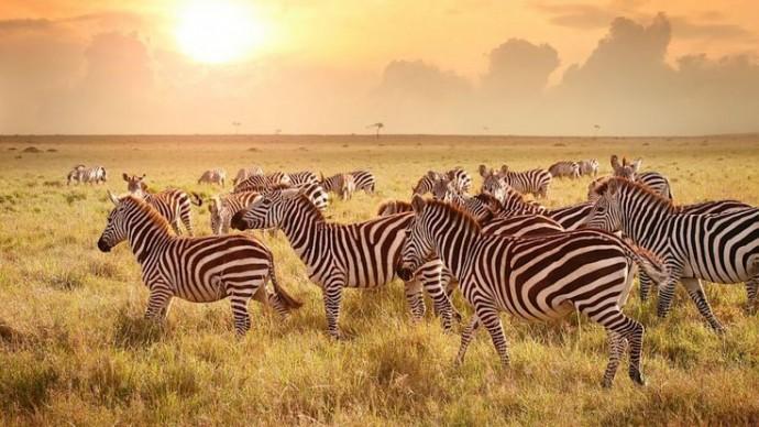 animaux safari tanzanie