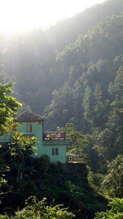 blue mountain jamaique 2