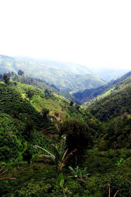 blue mountain jamaique