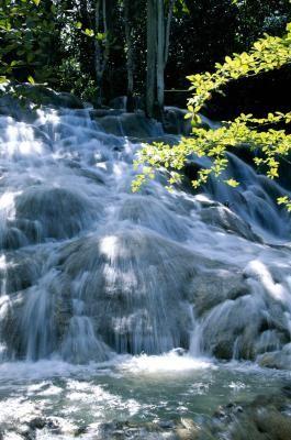 cascade jamaique
