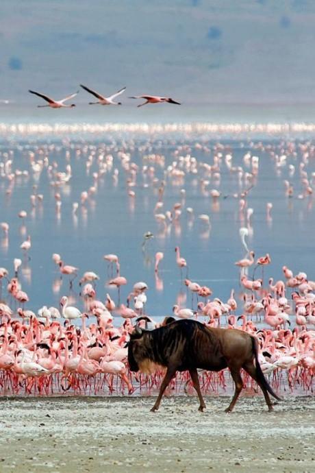 grande migration tanzanie safari