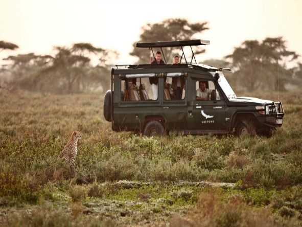 jeep tanzanie safari 12