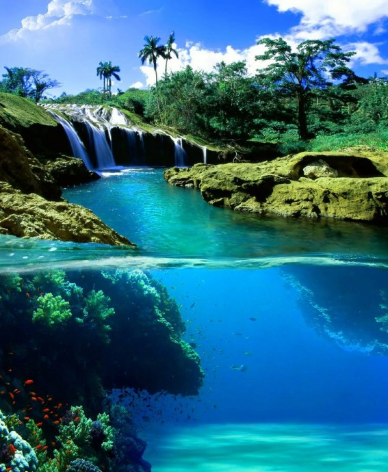 plongee jamaique