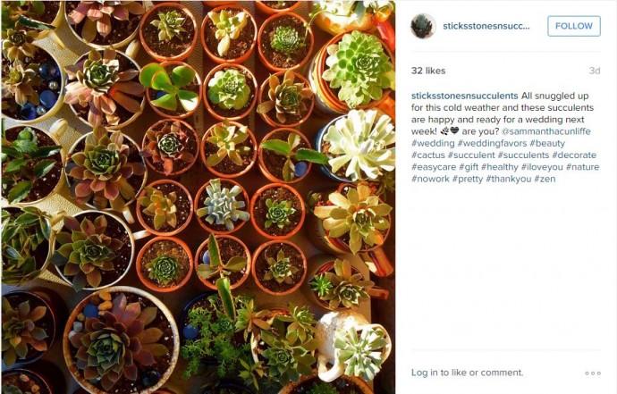 """Une jolie plante à mettre dans une maison ou un jardin. Quand leurs yeux se poseront dessus, ils ne penseront qu""""à vous!"""
