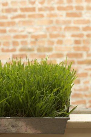 pot herbe