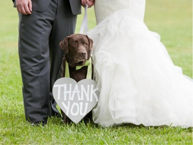 comment dire merci a ses invites de mariage (11)