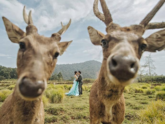 mariage-cerf-photobomb