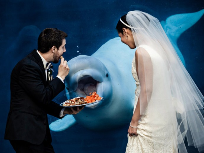 mariage-dauphin-manger