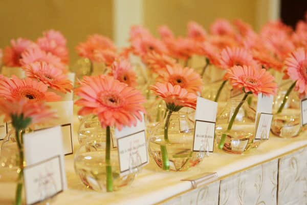 marque place gerbera corail