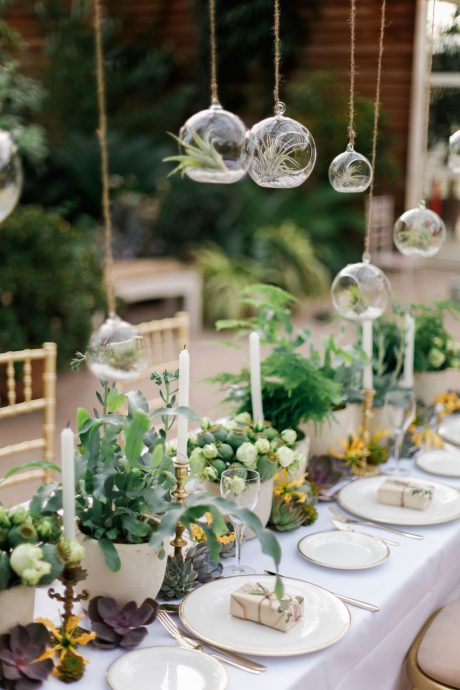 tavble vert et bulle transparente plantes