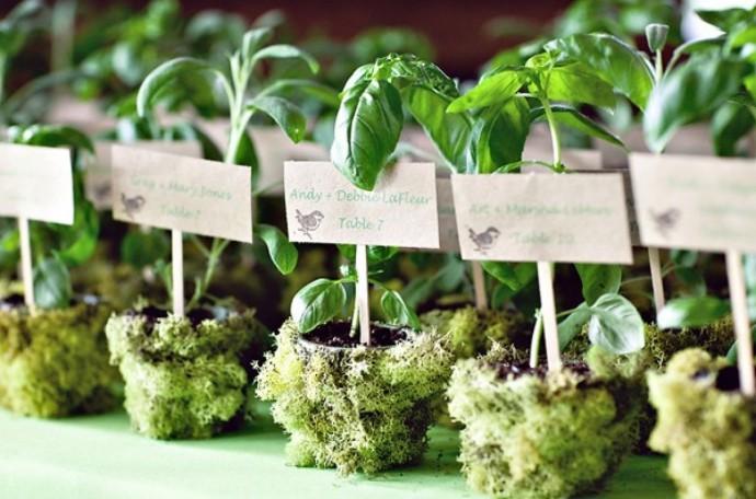 cadeaux-invités-mariage-plante-aromatique