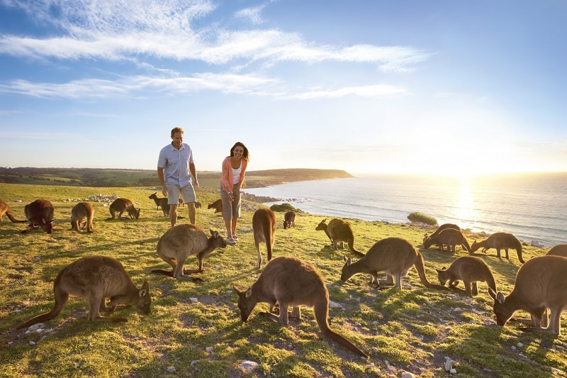 australie_south_australia_kangaroo_island@tourism_australia
