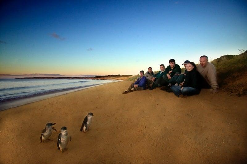 australie_victoria_phillip_island3@tourism_australia