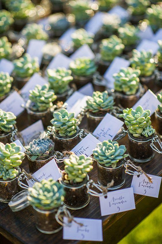 Petite plante à offrir à vos invités le jour de votre mariage