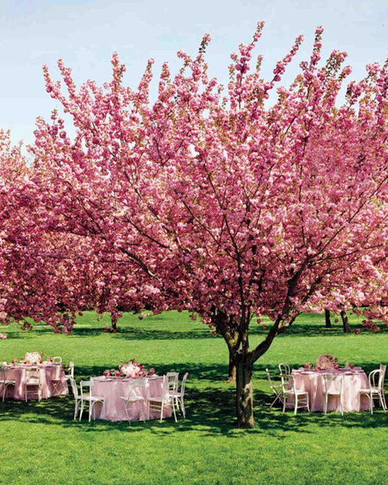 decor mariage fleur de cerisier