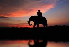 Bienvenue au Sri Lanka pour votre lune de miel