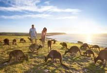 Les 5 merveilles de l'Australie du Sud à voir absolument lors de votre voyage de noces