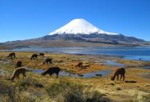 Chili : en avant pour une lune de miel remplie d'aventures ?