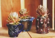 Et si on transformait des vieux pots en verre en jolis pots à plantes grasses ?