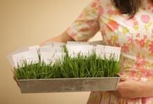 DIY : petits pots d'herbe fraîche pour fabriquer le plan de table